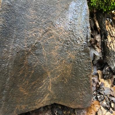 Hoja fosilizada. Foto Carlos de Rodrigo